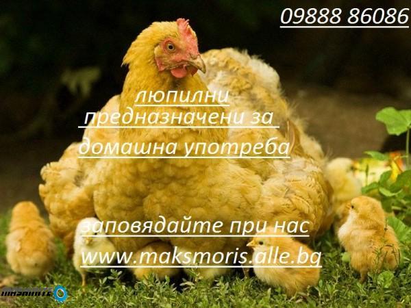 Инкубатори-Люпилни